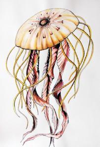 jelly-los